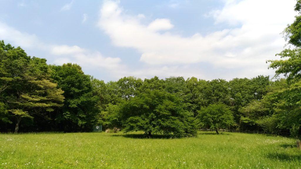 グリーンヨガフェスタ町田